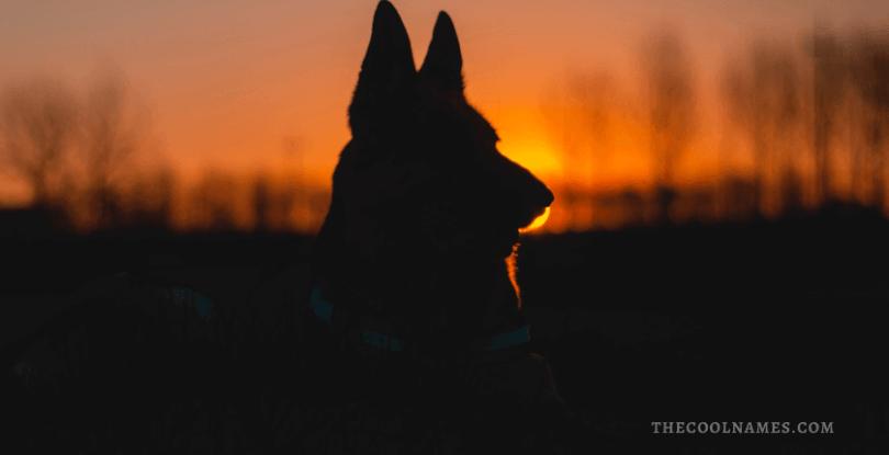 Unique Names for German Shepherd