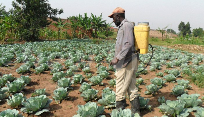 Farmers' Cooperative members get Commercial farming and Food Security skills
