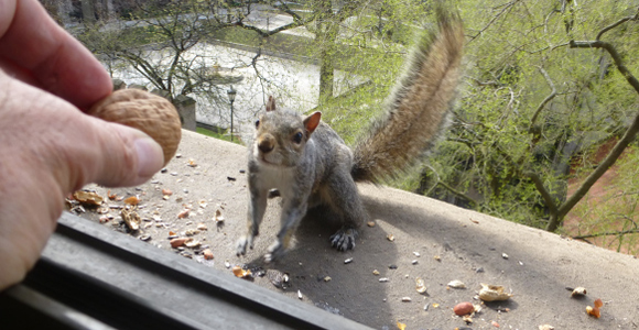 Image result for chicago squirrel