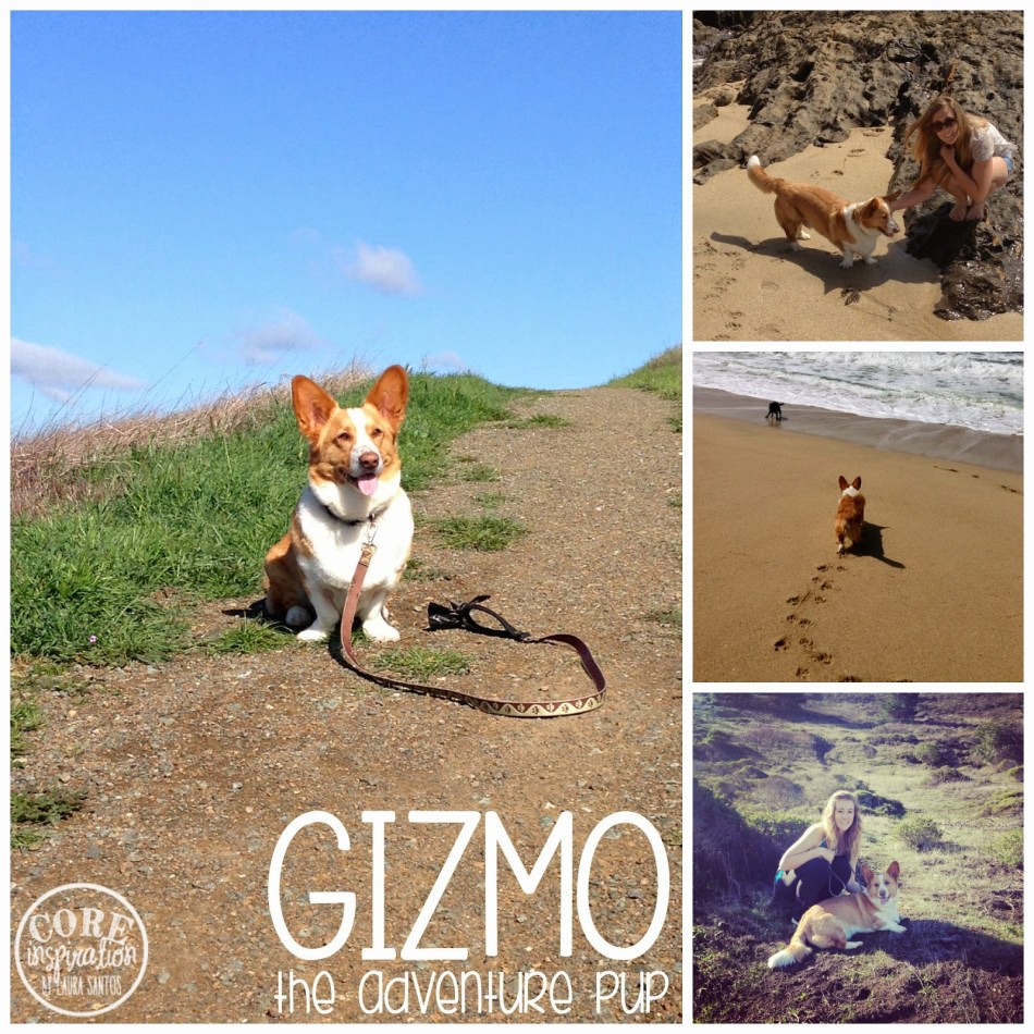 Gizmo on his various hiking adventures.