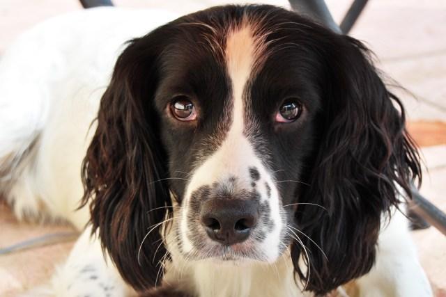 Getting a Dog | The Cornish Dog
