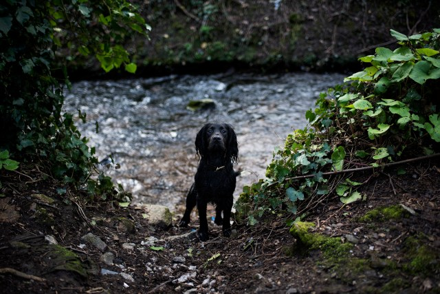 Penryn Nature Trail | The Cornish Dog