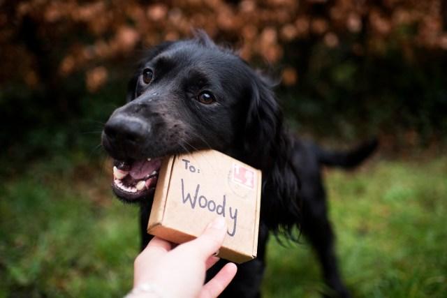 Contact | The Cornish Dog