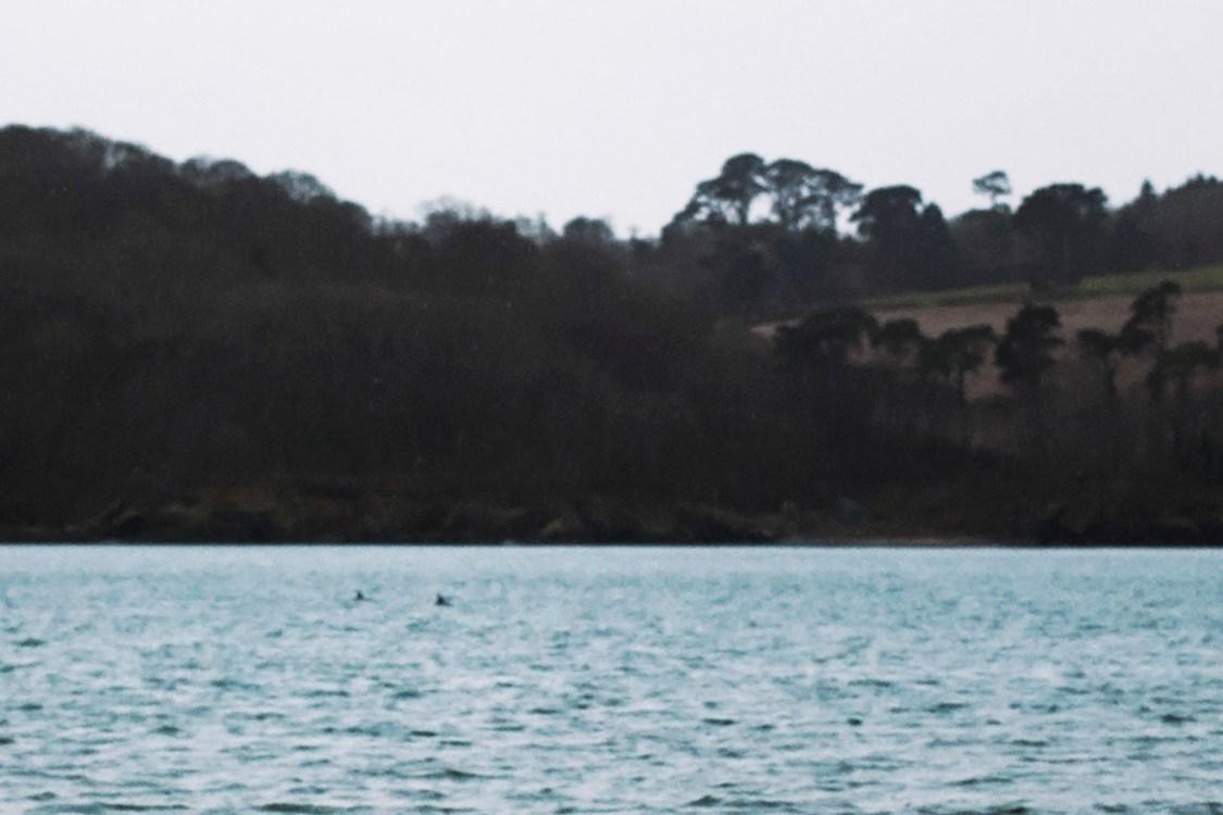 Carwinion Woods   The Cornish Dog