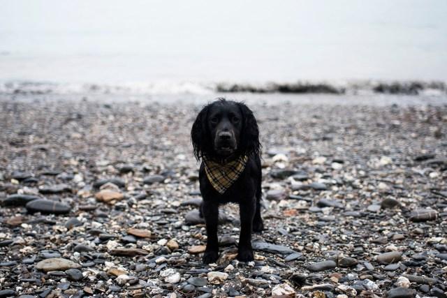 Cornish Bucket List | The Cornish Dog