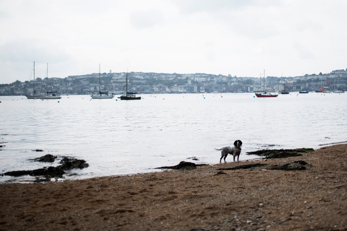 Trefusis Point | The Cornish Dog