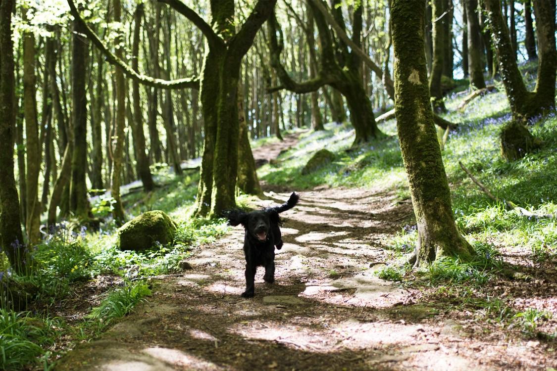 Trewardreva Mill | The Cornish Dog