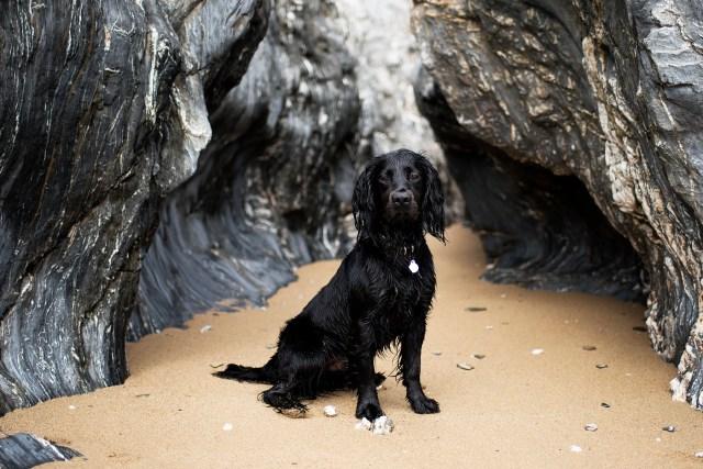 Nansidwell | The Cornish Dog