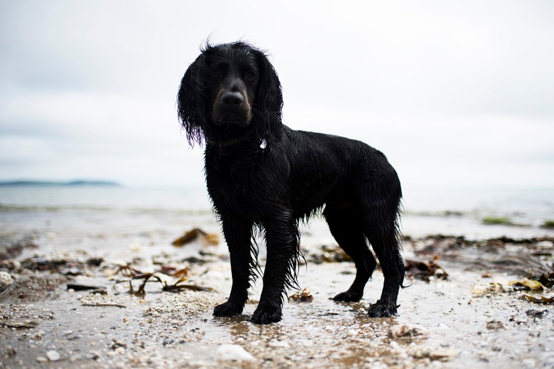 Nansidwell | The Cornish Dog
