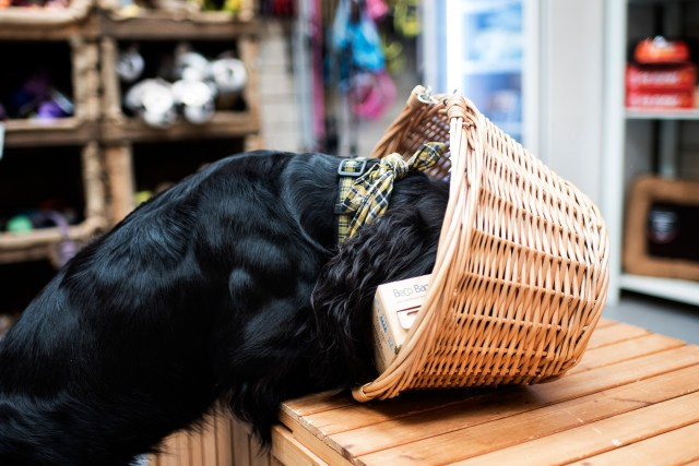 Paws in Padstow | The Cornish Dog