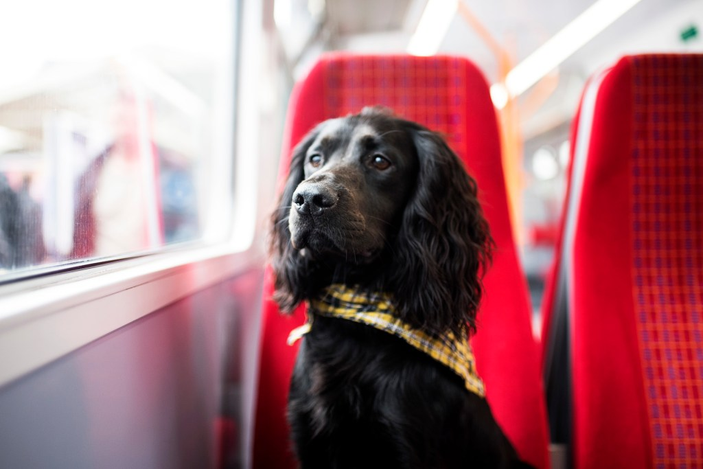 A Trip Fit for a King   The Cornish Dog in London