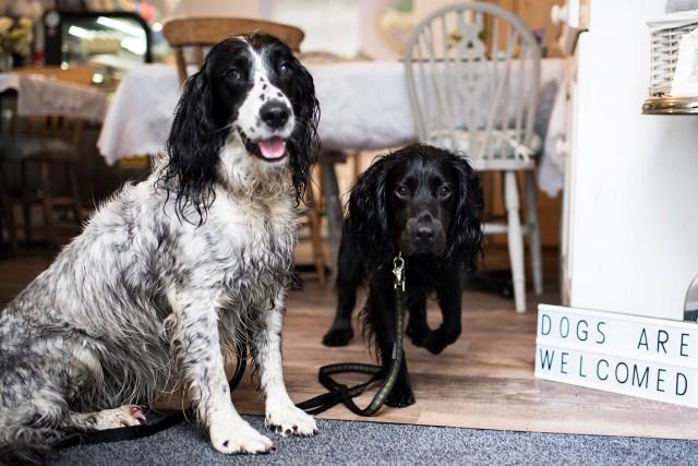 Teacup Tearoom   The Cornish Dog
