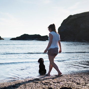 What to do if you Find a Lost Dog in Cornwall | Tips and Tricks