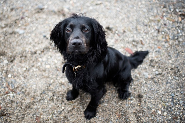 Lost Dog in Cornwall | The Cornish Dog