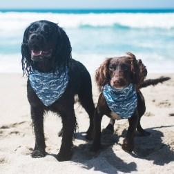 Gwynver Beach | The Cornish Dog