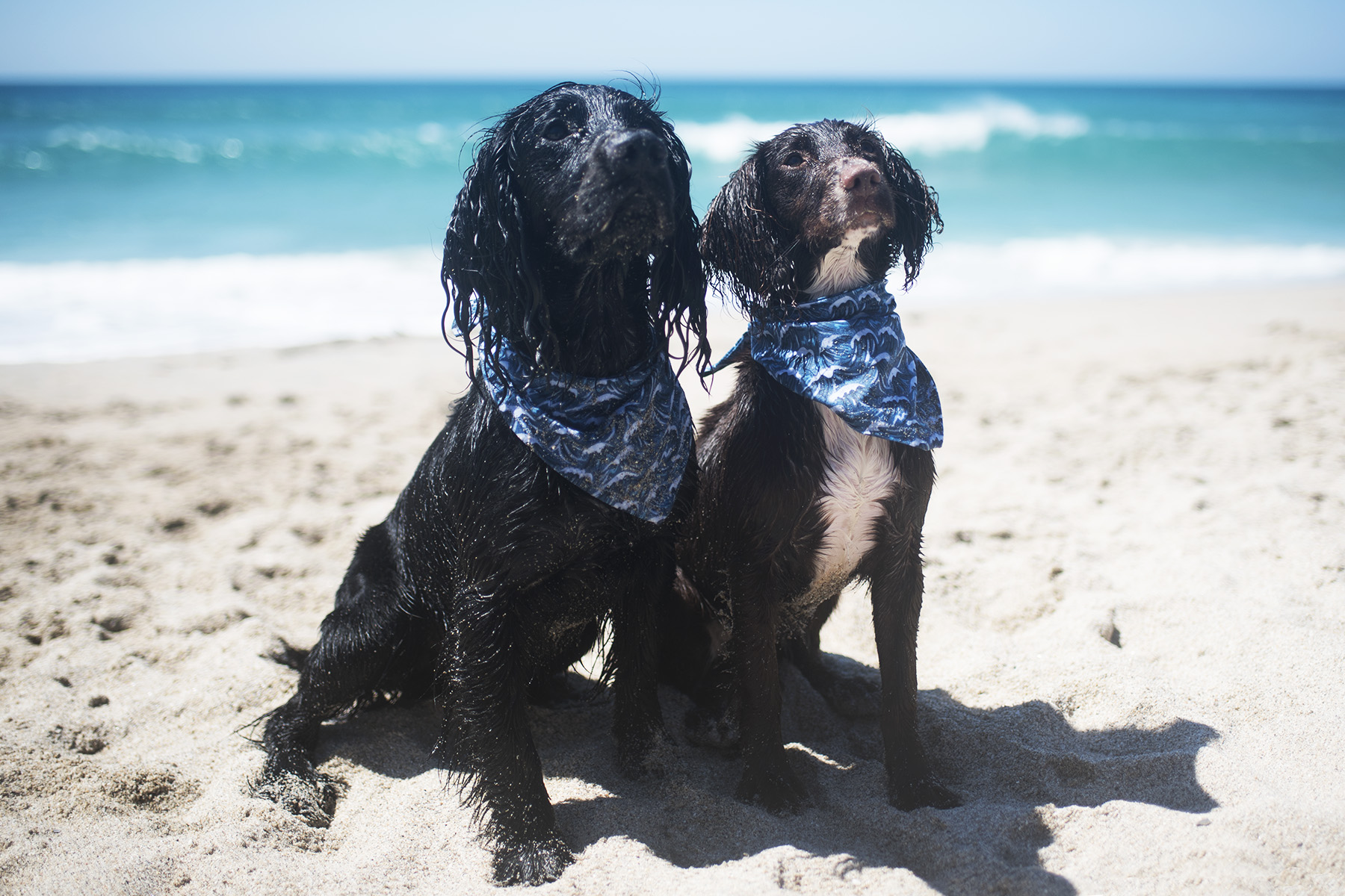 Cornish Dog Bandanas | Low Waste Swaps for You and Your Dog | The Cornish Dog