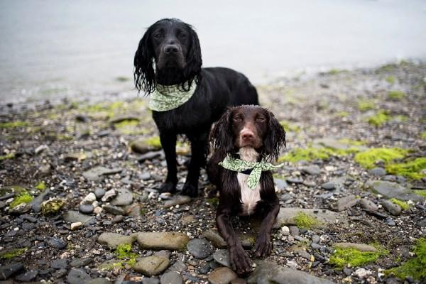 Carwinion Bandana | The Cornish Dog