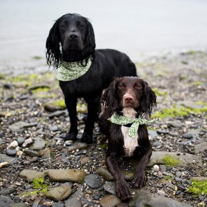 Carwinion Bandana | The Cornish Dog