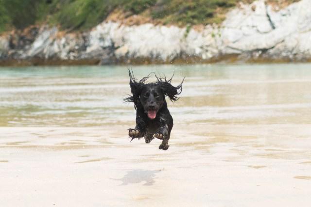 Crantock Beach | The Cornish Dog