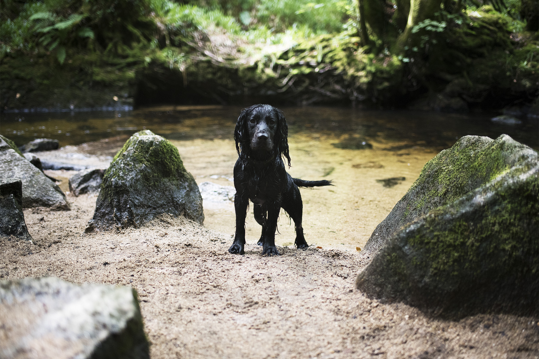 Golitha Falls | The Cornish Dog