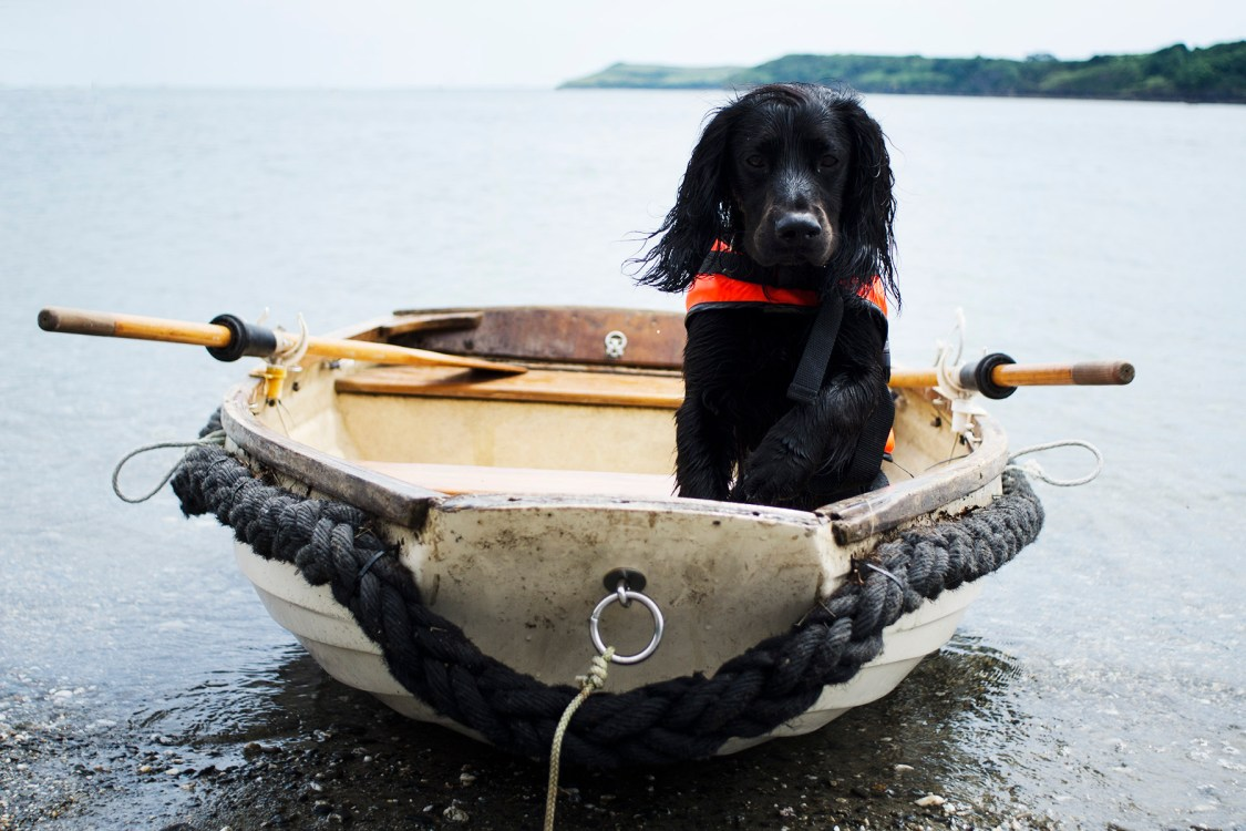 Building Your Dog's Confidence in Water | Our Goals for 2019 | The Cornish Dog