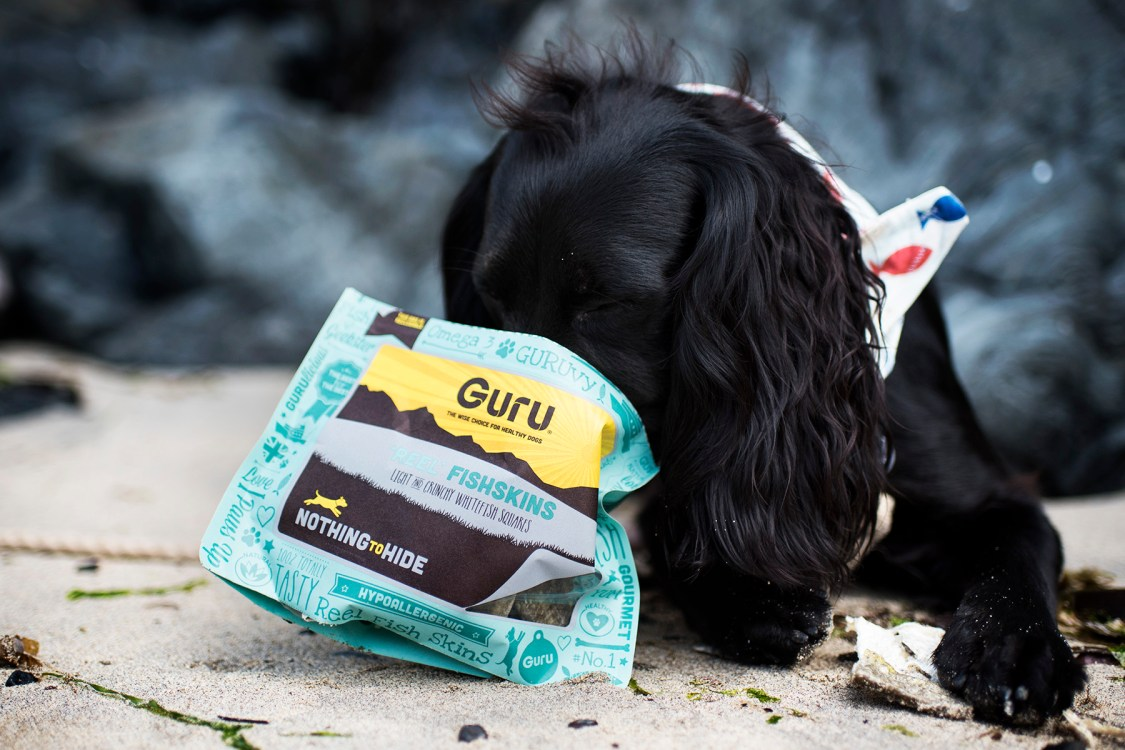 Building Your Dog's Confidence in Water | The Cornish Dog