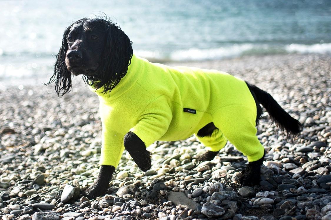 Equafleece | Drying Coat for Your Dog | The Cornish Dog