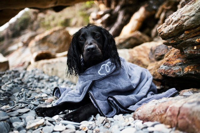 Paws and Presto Drying Device | Drying Coat for Your Dog | The Cornish Dog