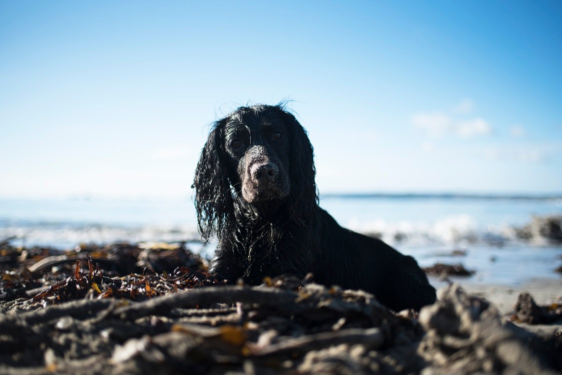 Our Favourite Winter Beaches | The Cornish Dog