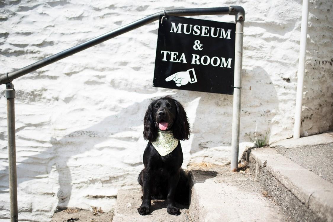 Dog Friendly Polperro | The Cornish Dog