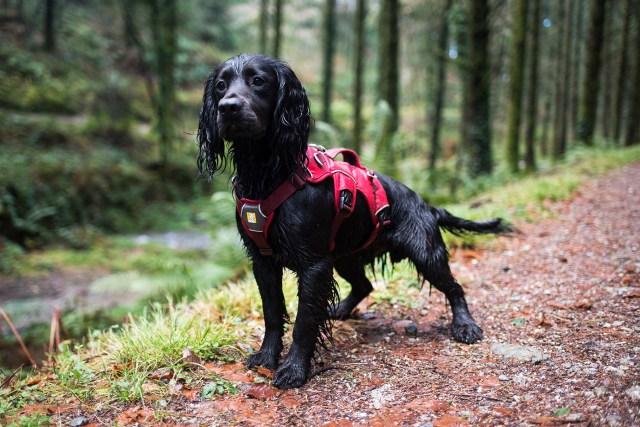Cardinham Woods | The Cornish Dog