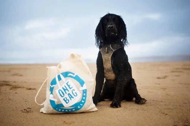 A Dog Friendly Beach Clean with Cornish Creatives | The Cornish Dog
