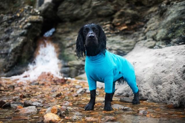 Winter Dog Walking Essentials | The Cornish Dog
