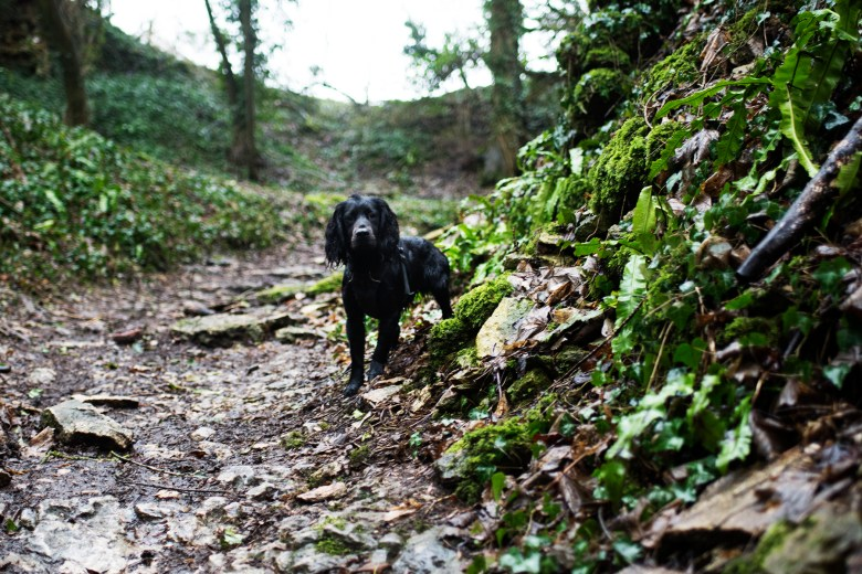 A Dog Friendly Trip to The Cotswolds   The Cornish Dog