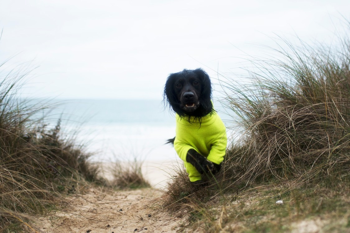 Dog Friendly Retreats | Multi Purpose Dog Products | The Cornish Dog