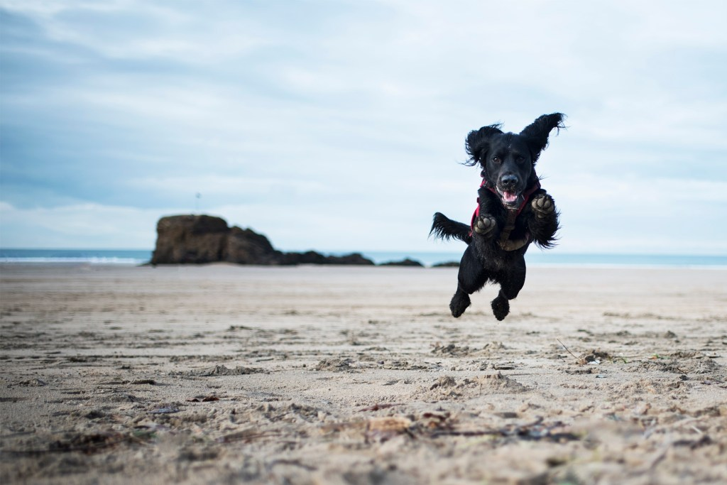 Dog Friendly Beaches in Cornwall We'd Like To Visit | The Cornish Dog