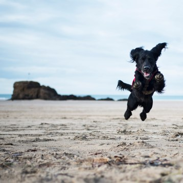 Dog Friendly Beaches in Cornwall We're Excited to Visit