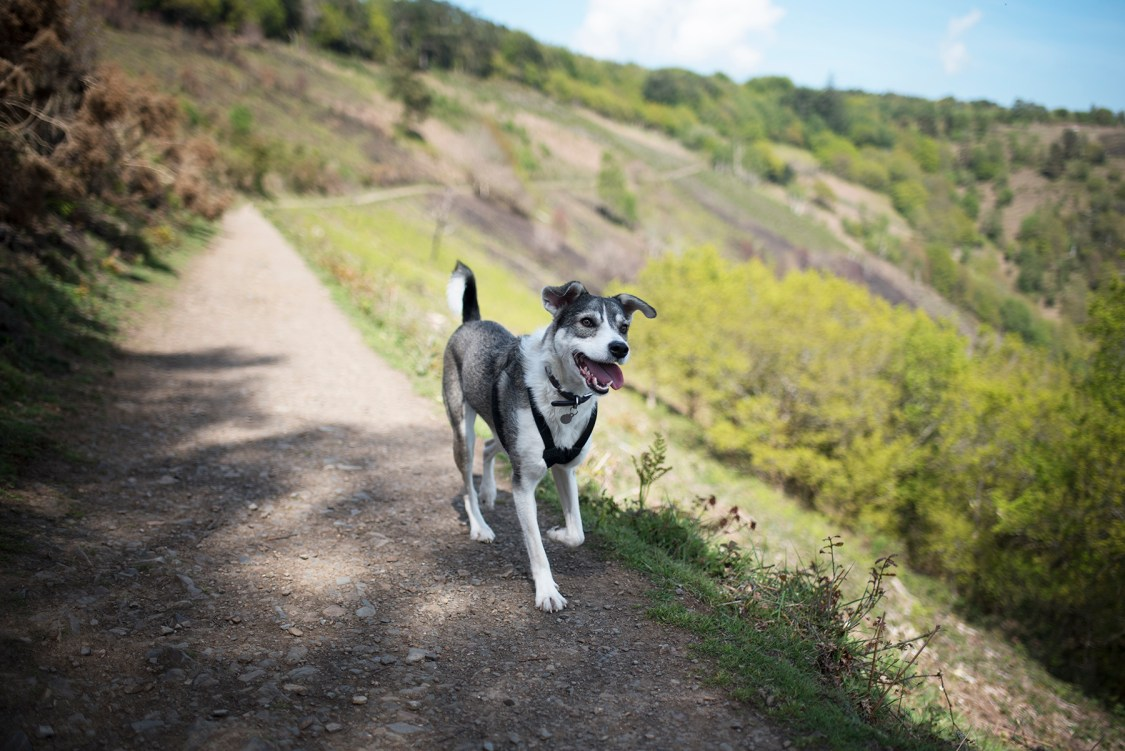 A Dog Friendly Day in Exeter | The Cornish Dog