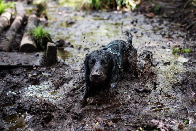 College Reservoir | The Cornish Dog