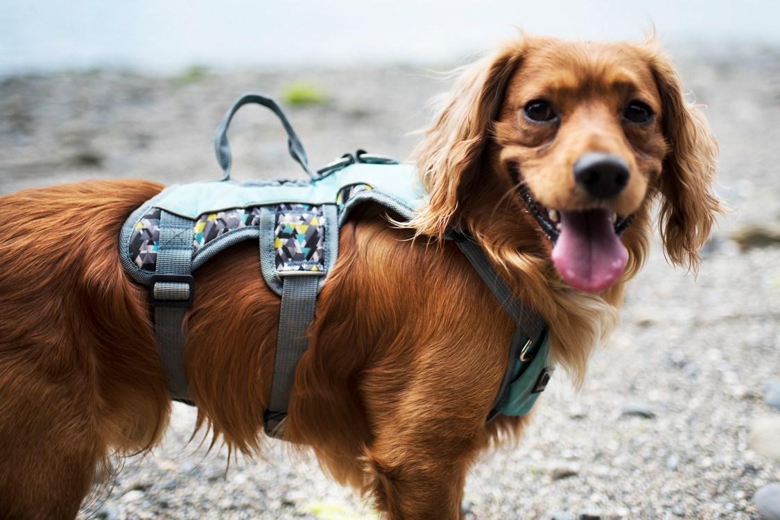 3 Peaks Excursion   The Cornish Dog
