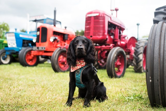 The Royal Cornwall Show | The Cornish Dog