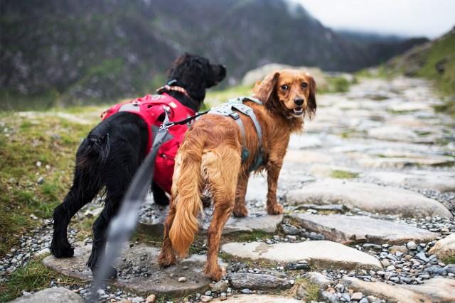 Ready to Climb Snowdon | The Cornish Dog