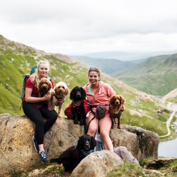 Climbing Snowdon with Dogs