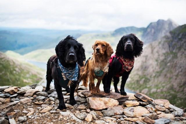 Climbing Snowdon with Dogs | The Cornish Dog