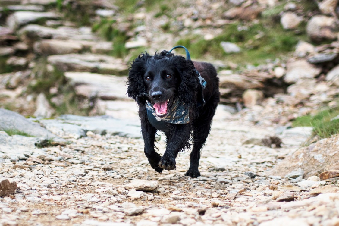 Foster Dog Snoop Joined Us | The Cornish Dog