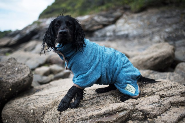 Foster Dog Essentials | The Cornish Dog