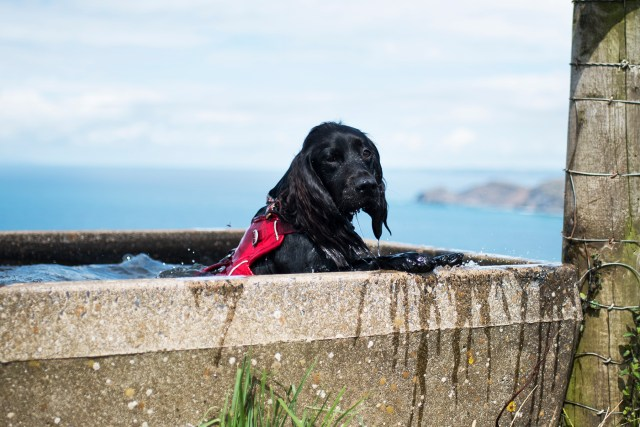 Woody's Swimming Pool - The Cornish Dog