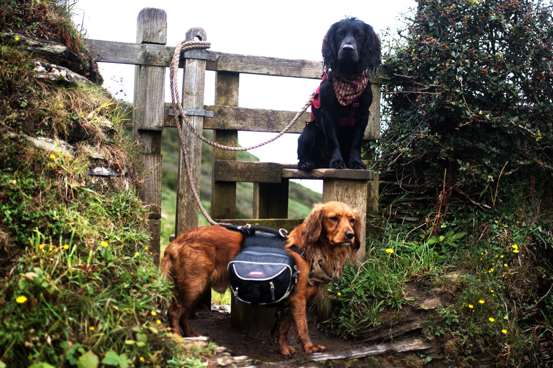 The Cornish Coast Path - The Cornish Dog