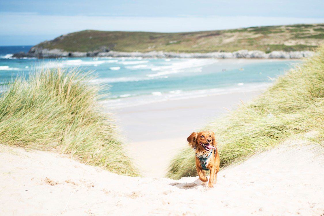 Port Isaac to Gwithian | The Cornish Dog
