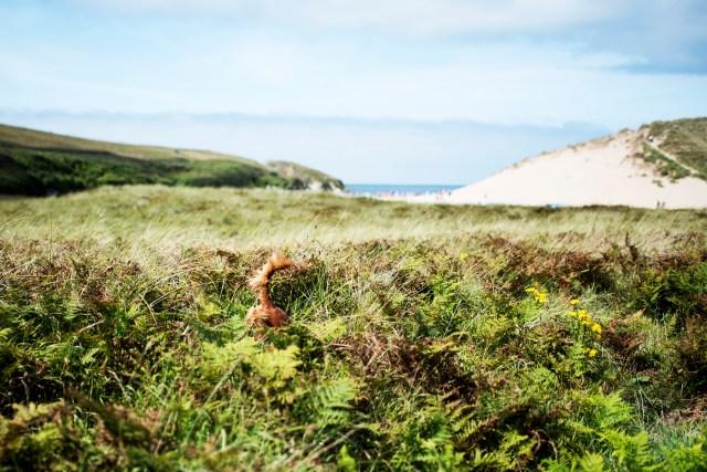 Where's Hen? | The Cornish Dog